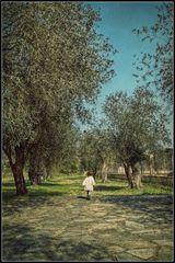Tra gli ulivi