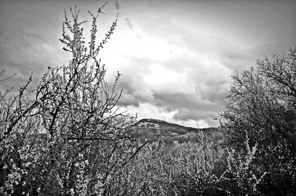 tra il biancospino e il monte