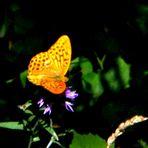 Tra le ombre del sottobosco una farfalla.