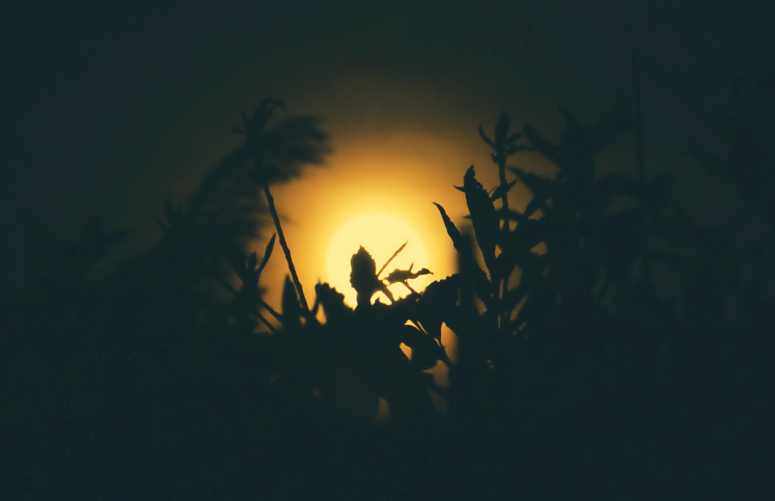 Tra le pieghe della notte!