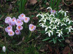 Tra-ri-ra der Frühling, der ist da .....