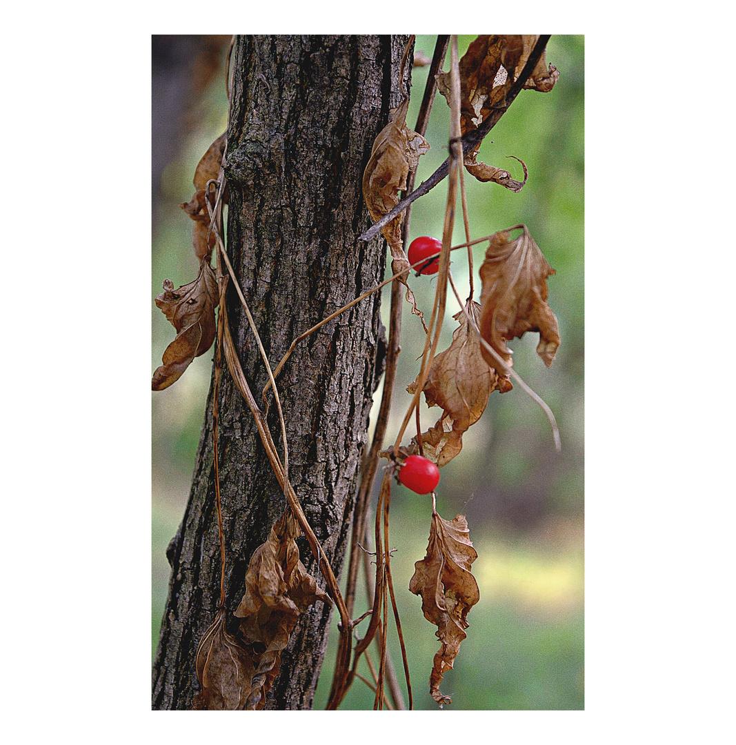 tracce d'autunno