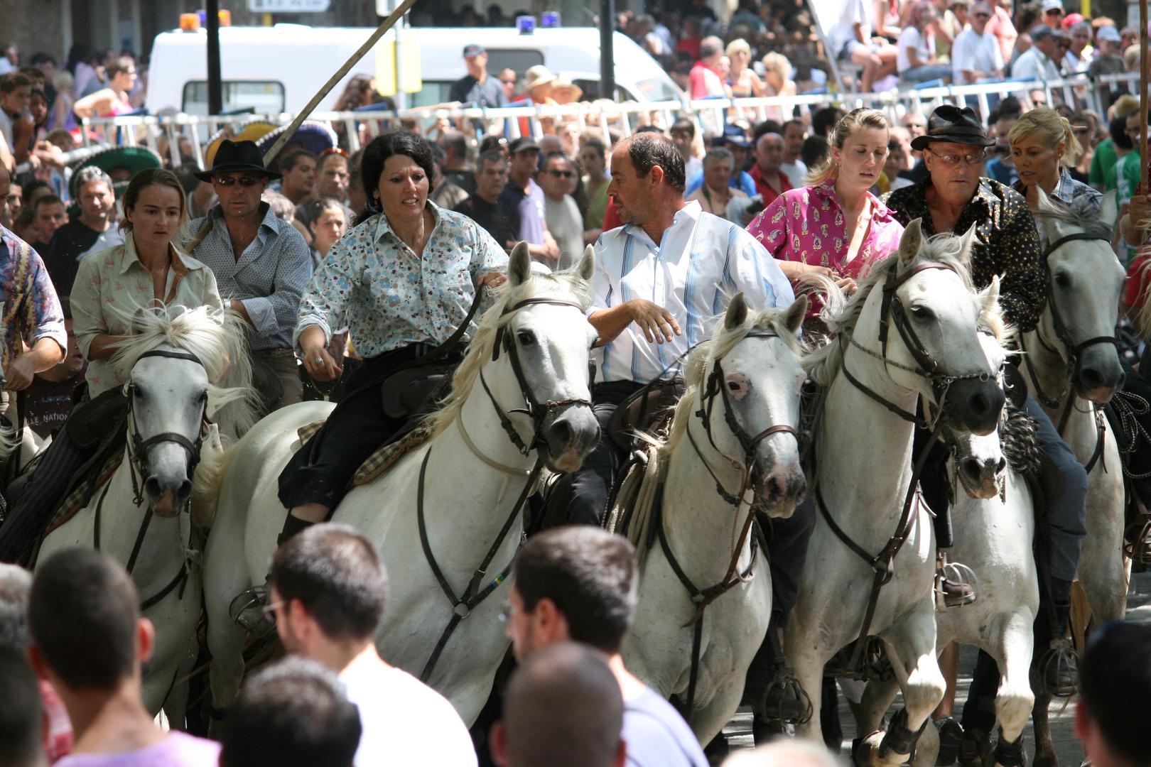 tradition bouvine en camargue