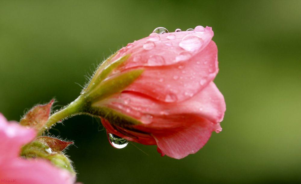 Tränen des Sommers...