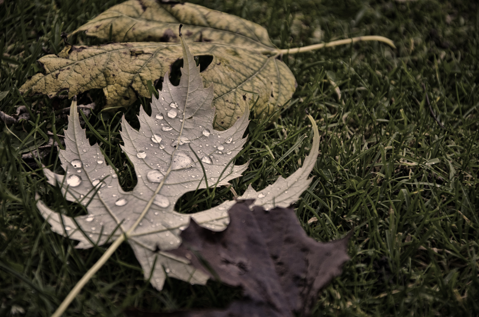 Tränen im Herbst...