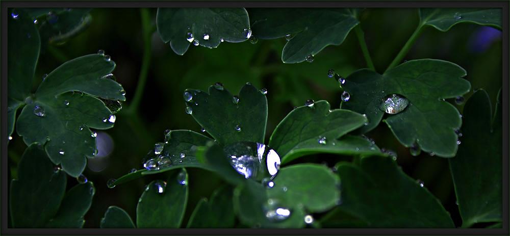 Tränen von Mutter Natur