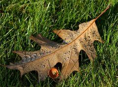 Tränenreicher Herbst
