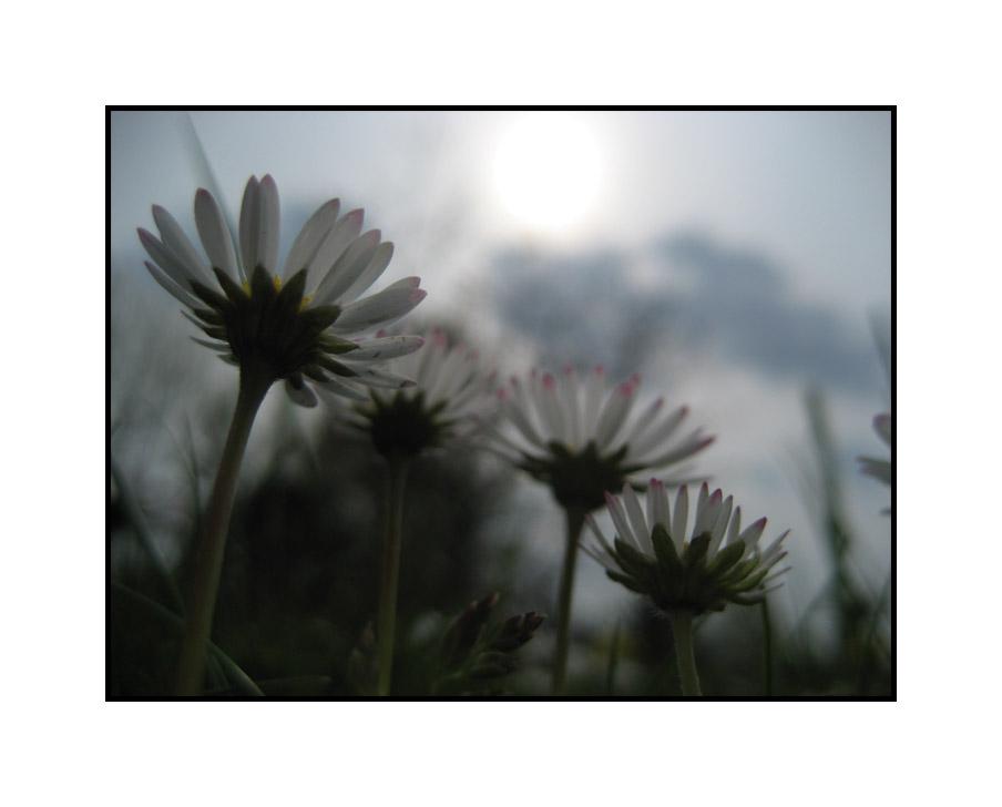 Träumen in der Blumenwiese