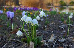 Träumen vom Frühling