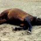 träumendes Pferd
