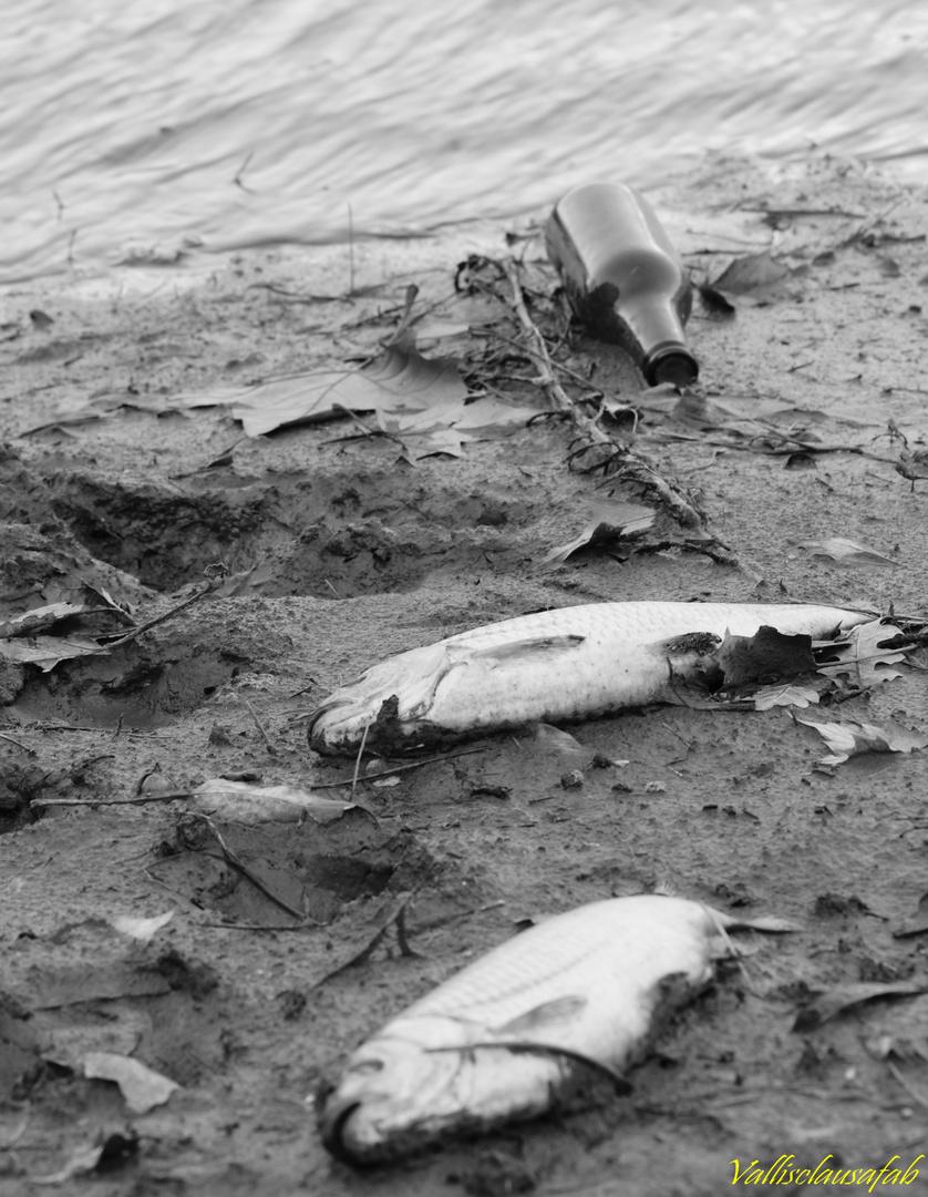 Tragédie en eau trouble