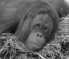 Tragödie im Krefelder Zoo