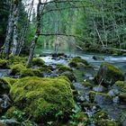 Trail Bridge Creek