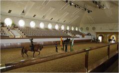 Training andalusischer Pferde