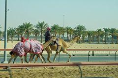 Training für das Kamelrennen