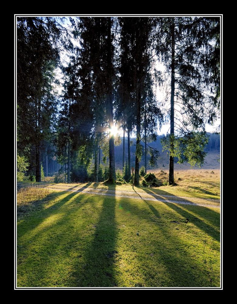 tramonto fra gl'alberi