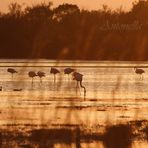 Tramonto in Camargue
