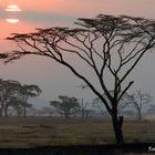 Tramonto nel Serengeti