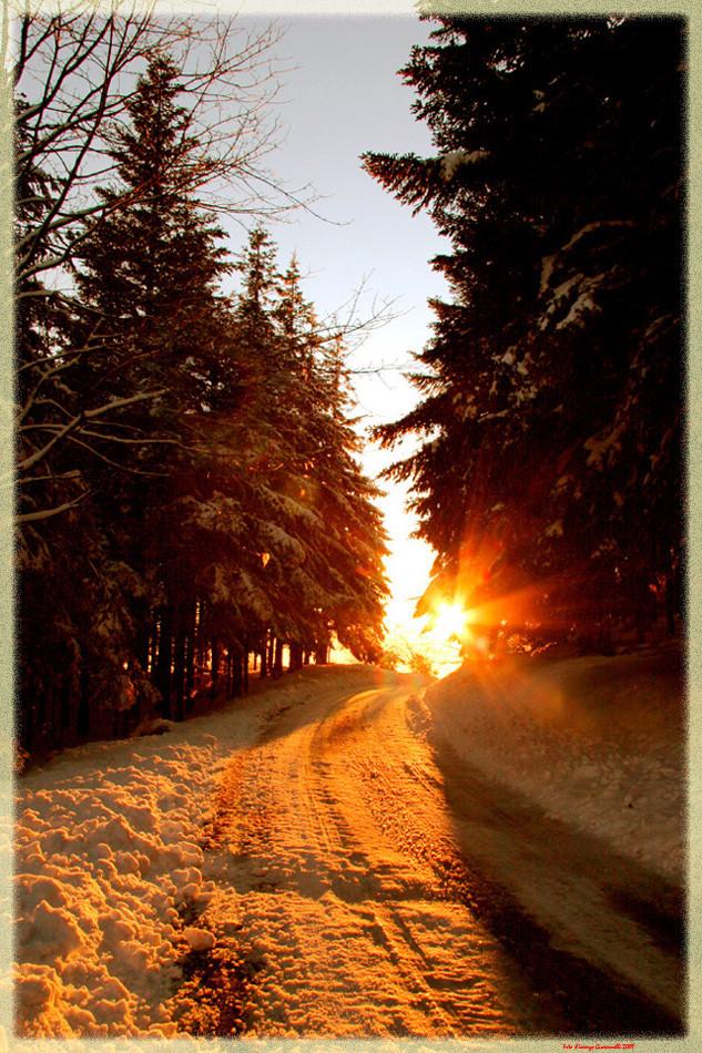 Tramonto nella Foresta: Acquerino (PT) anno 2007