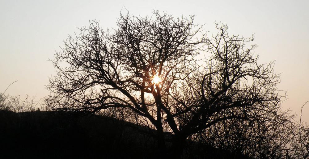 """tramonto """"parmigiano"""""""