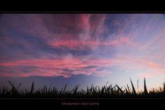 tramonto raso terra