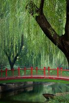 Tranquil scene steps away from noisy busy streets