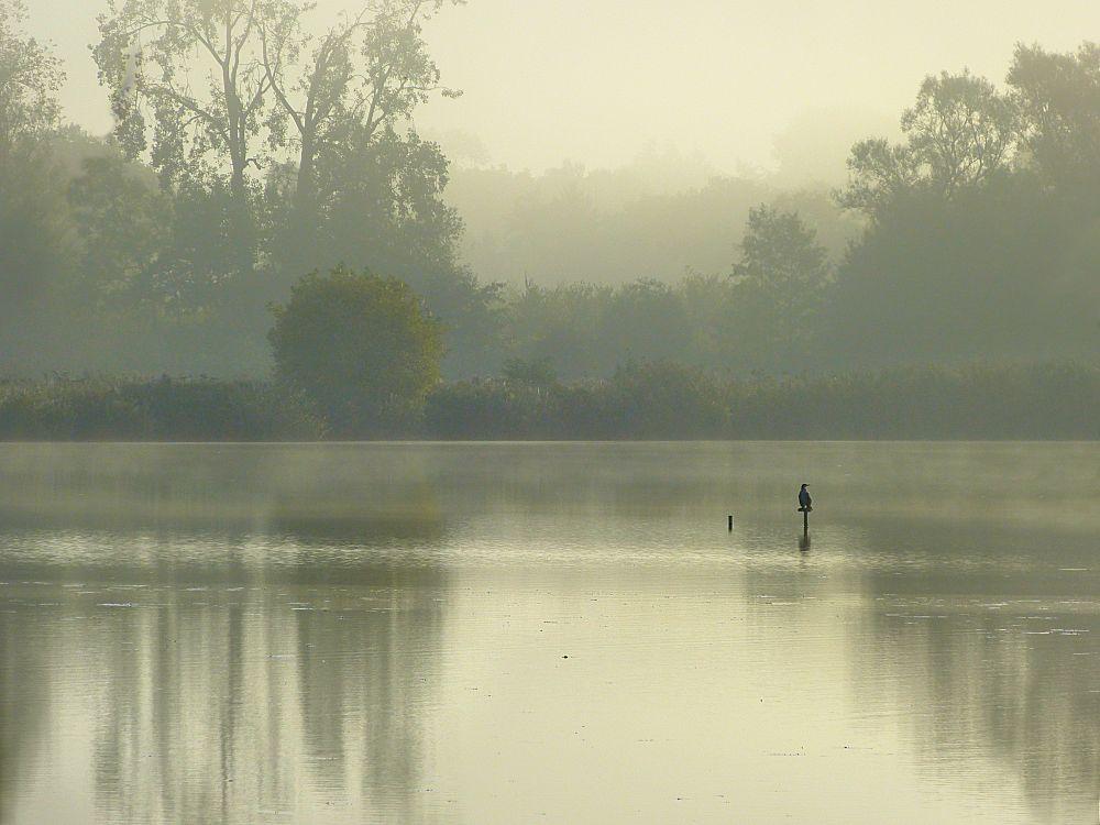Transparent mist over the lake