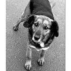 ... Transsilvanier mögen Hunde sehr sehr gerne....