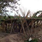 Traubenanbau in der Region Marrakesch