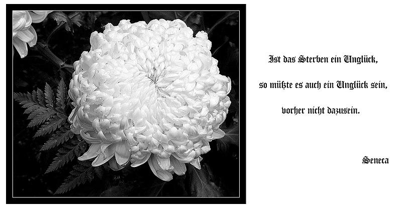 Trauerkarte: Tröstlich Foto & Bild