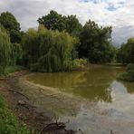 Trauerweiden am Teich