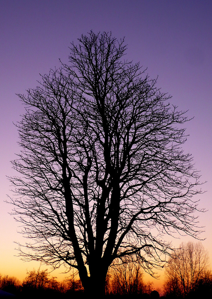 """Traum-Baum"""