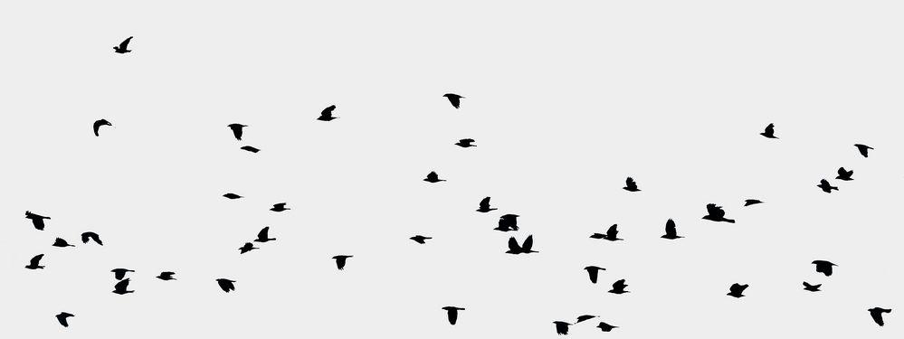 Traum der Freiheit vom Fliegen