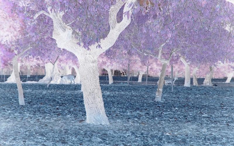 Traumbäume