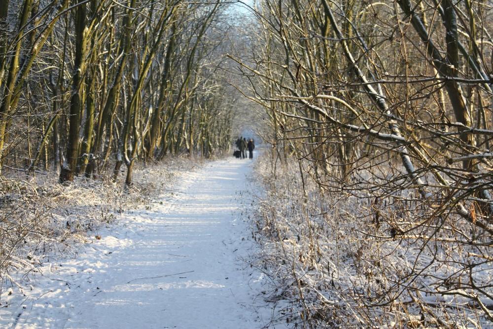 Traumhaft Spazieren im Schnee