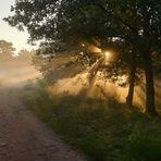 Traumhafte Licht-Nebelstimmung in der Mehlinger Heide.