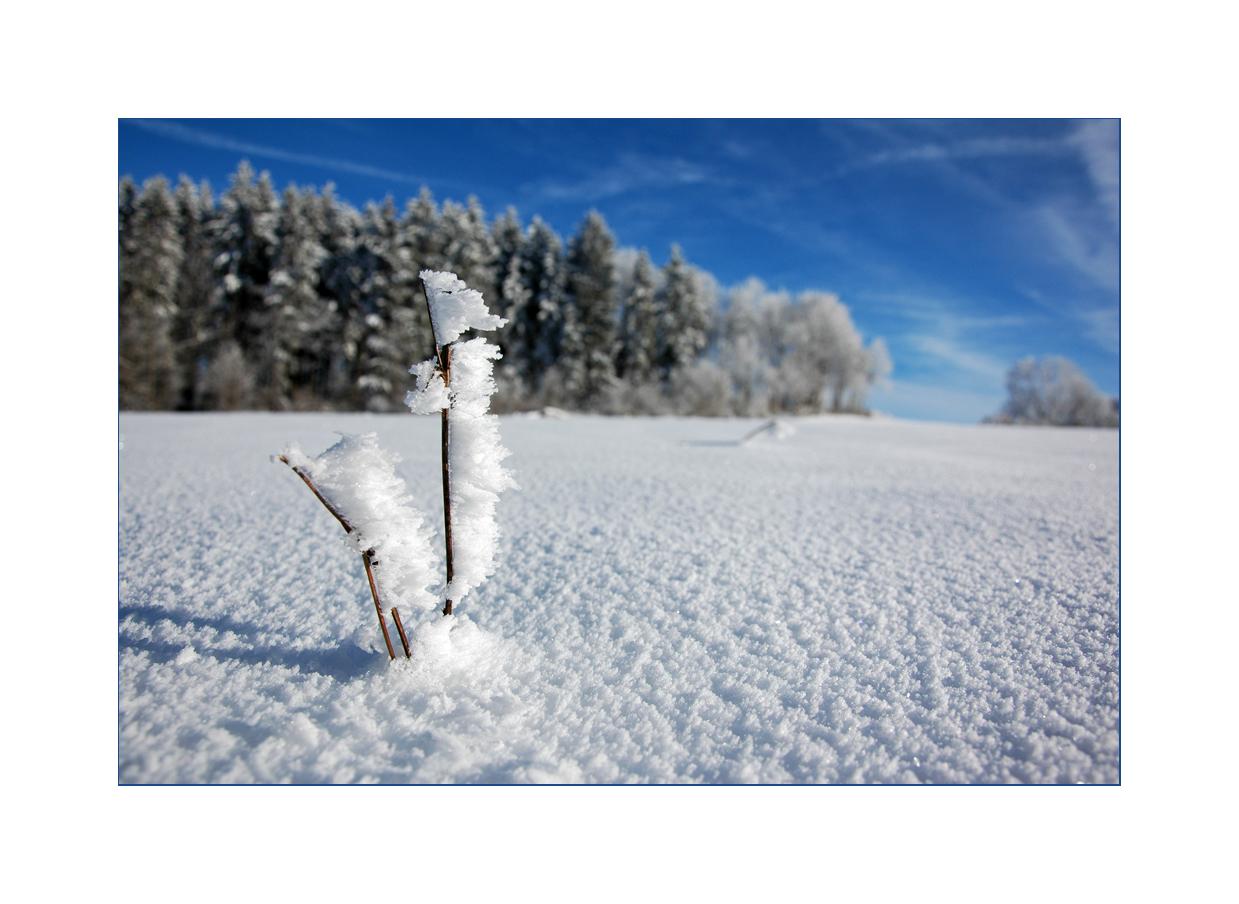 traumhafte Winterlandschaft