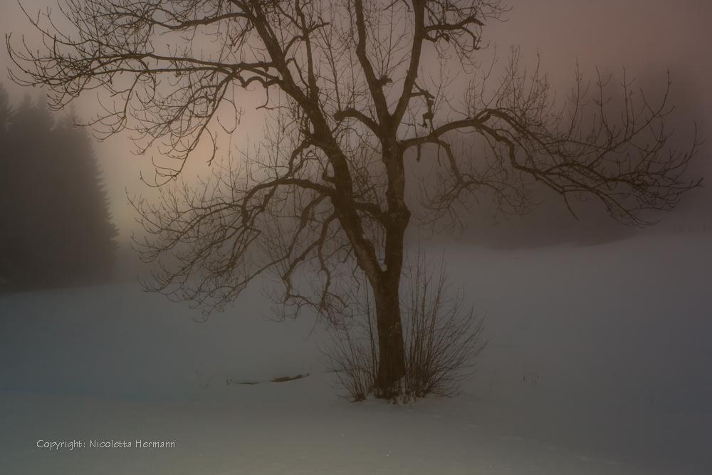 Traumlandschaft im Winter ...