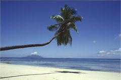 Traumstrand mit Palmenschatten