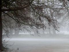 Traumwelt im Nebelschlaf