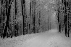 Traumwinter-Wintertraum