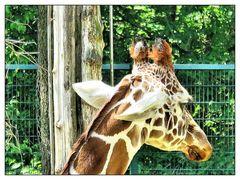 Traurige Giraffe Lubaya
