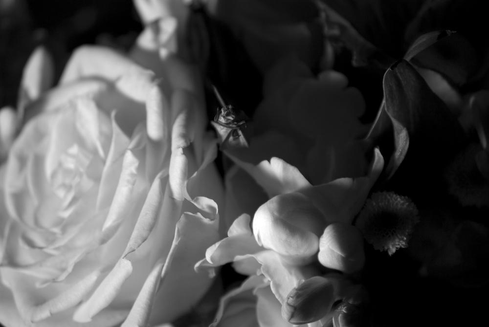 Traurige Rose