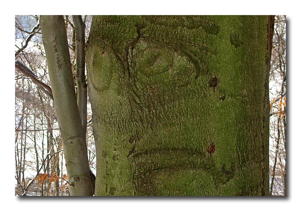 :-( Trauriger Baum...