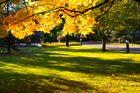 Trauriger Ort mit Schöner Herbststimmung