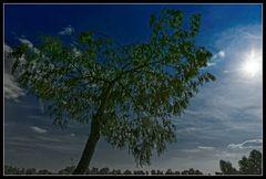 Trauriger Sonnenbaum