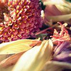 être en fleur