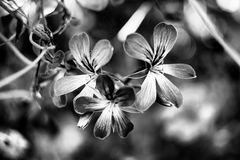 Tre piccoli fiori