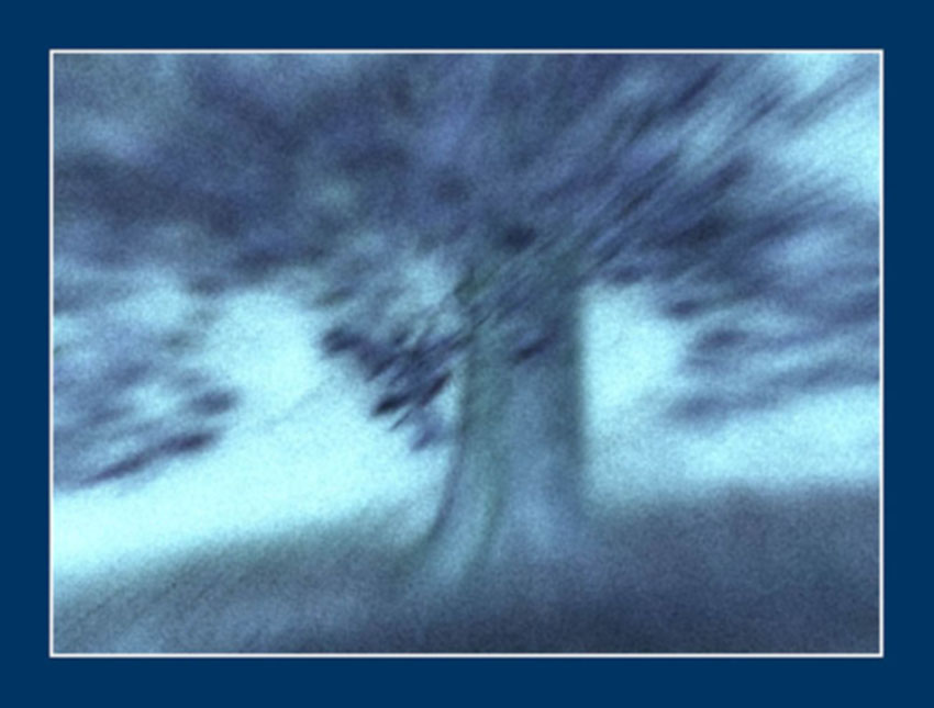 Tree #102