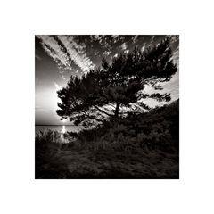 * Tree *
